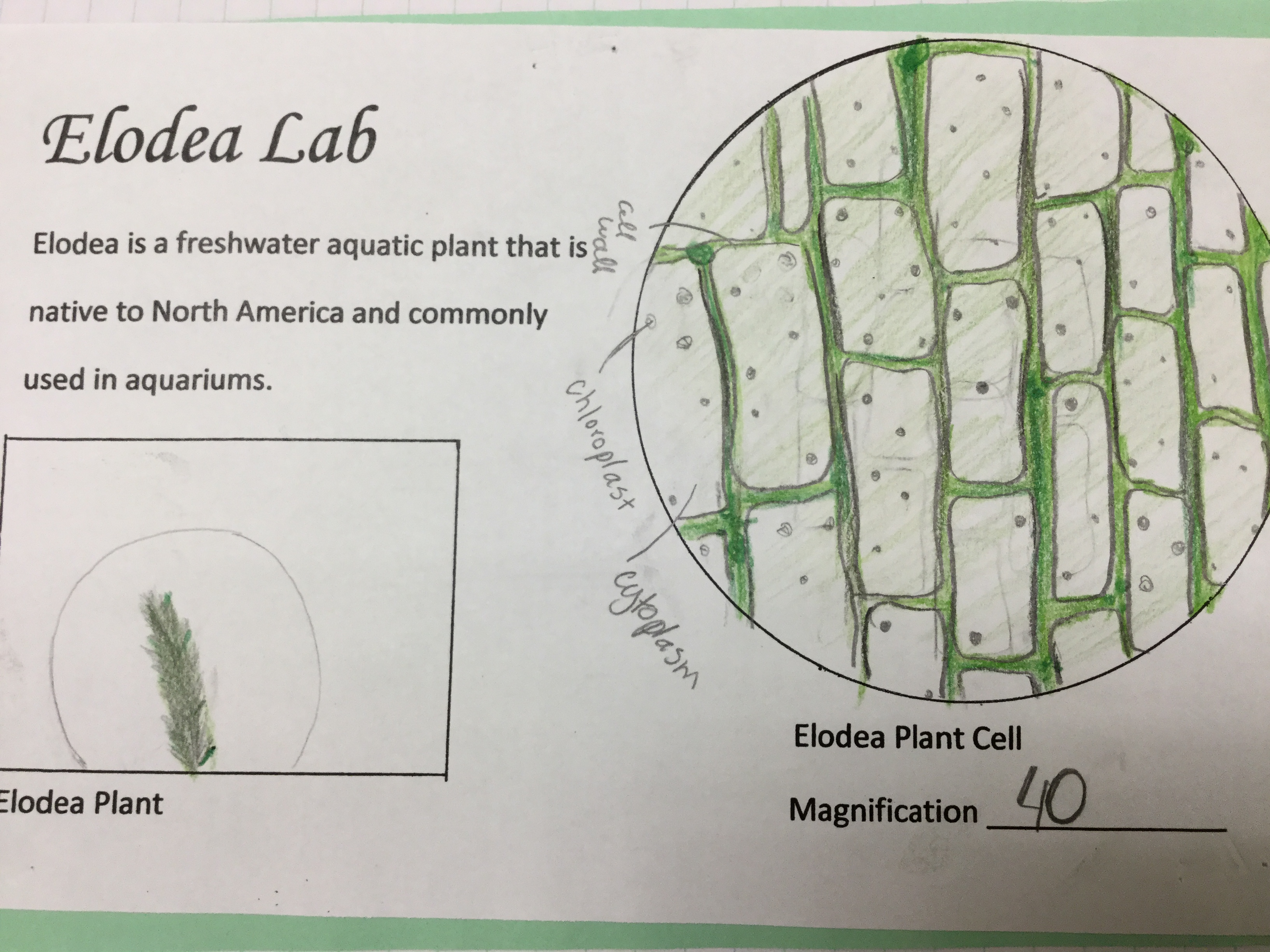Discovering chloroplast living taxonomy trinity valley school pooptronica