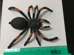spider scale5