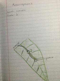 notebook12